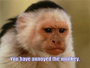 this-cuckoos-nest-588eb-you-have-annoyed-monkey.jpg