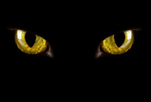 his-giant-mistake-jiu_rf_photo_of_cat_eyes_glowing_in_dark-300x203.jpg