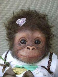 cute monkey1.jpg